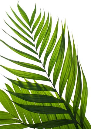 Пальмовая ветвь символ пасхи